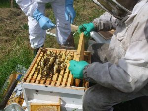 Tribes Beekeepers Association members inspecting a hive.