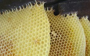 honey comb beeswax